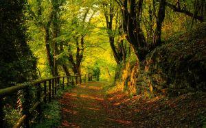lesna cesta, zabradlie, stromy, farebne listie 150517